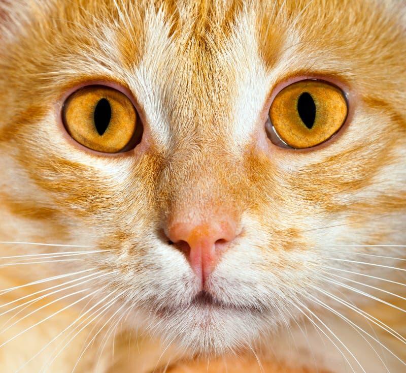 Nahes hohes der Katze lizenzfreies stockfoto