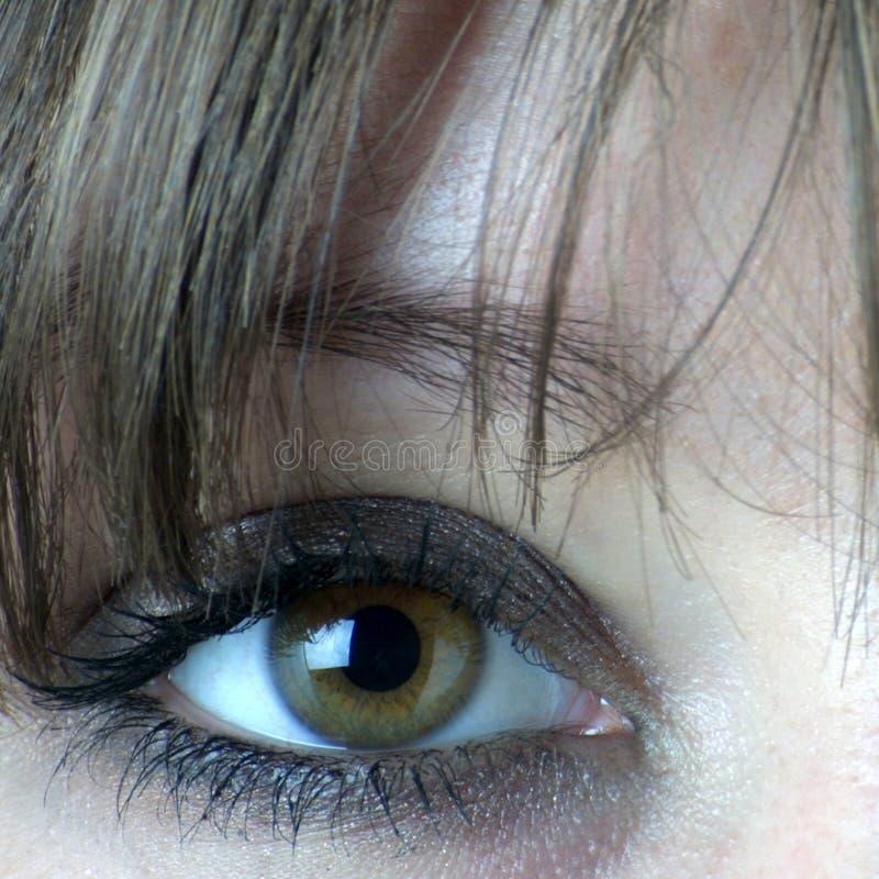Nahes hohes des Auges stockbilder