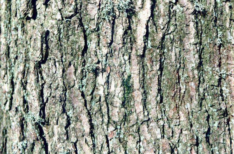 Download Nahes hohes des Baums stockbild. Bild von organisch, holz - 35693