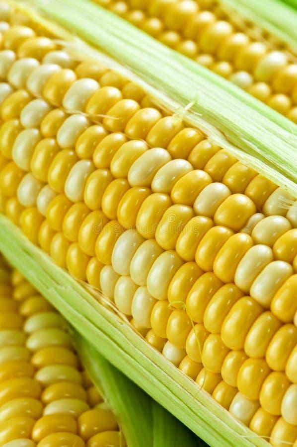 Nahes hohes des Mais stockfotos