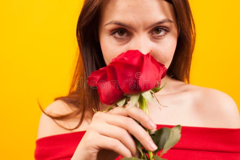 Nahes hohes Porträt von schönen riechenden roten Rosen und von Betrachten der Kamera über gelbem Hintergrund stockbilder