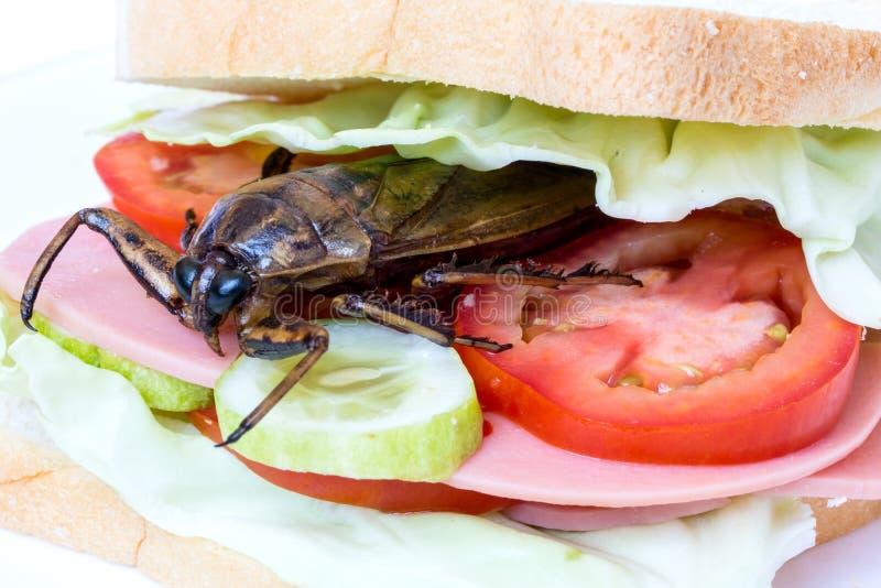Nahes hohes Sandwich mit gebratener Schabe lizenzfreies stockbild