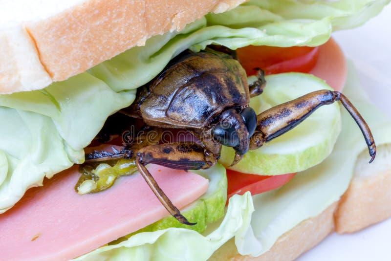 Nahes hohes Sandwich mit gebratener Schabe stockfoto