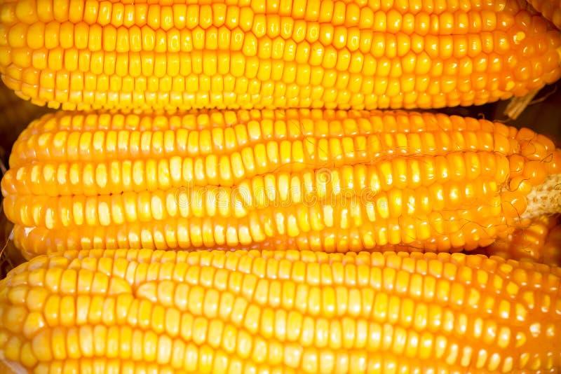 Nahes Makrotrieb von Maizebhutta-Ernte, Thakurgaon, Bangladesch lizenzfreies stockfoto