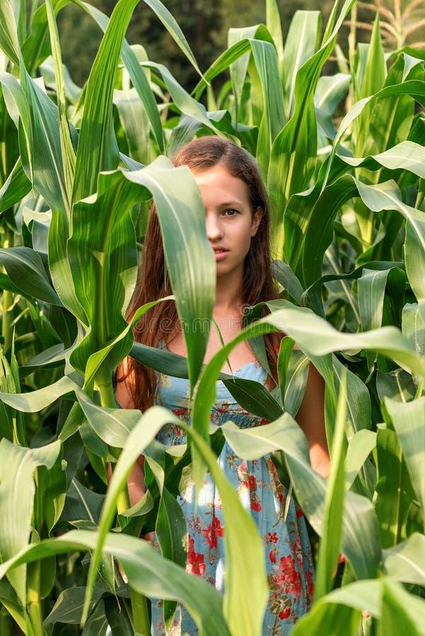 Nahes Porträt eines Mädchens auf einem Getreidefeldfeld und einem halben Gesichtsabschluß oben durch enorme Blätter lizenzfreies stockfoto