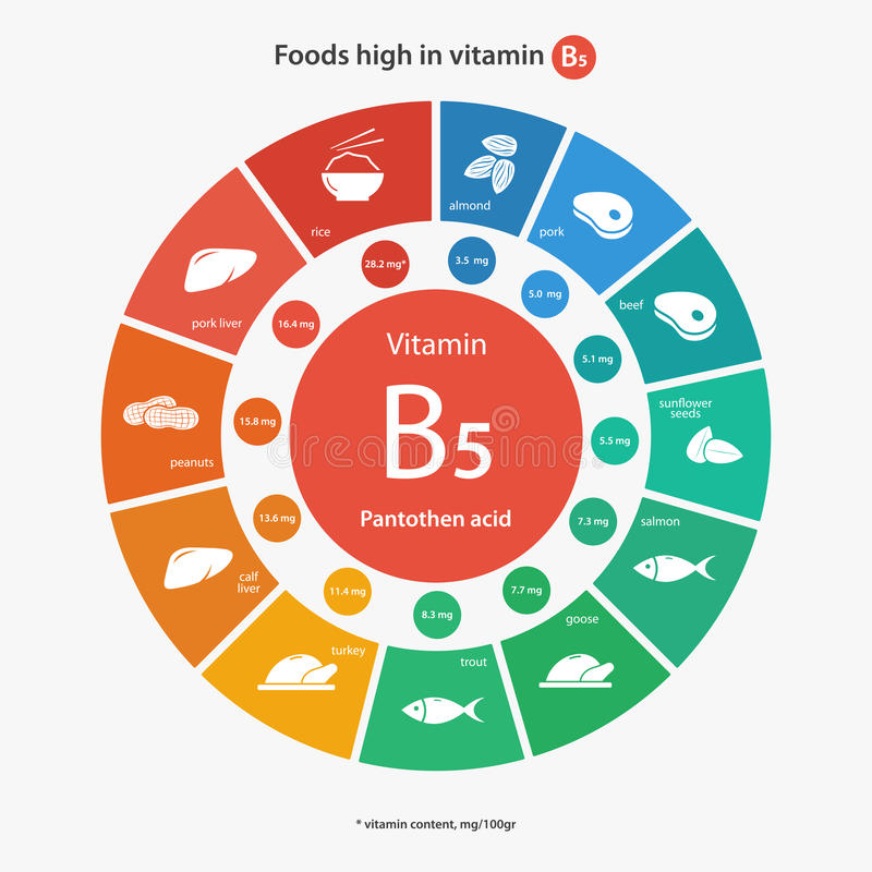 Nahrungsmittel hoch im Vitamin B5 vektor abbildung