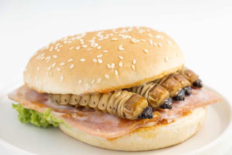 Nahrungsmittelinsekten: Wurmk?fer oder Scarab?us-K?fer f?r das Essen als Nahrungsmittel im Brotburger an gemacht von gekochtem In stockfotografie