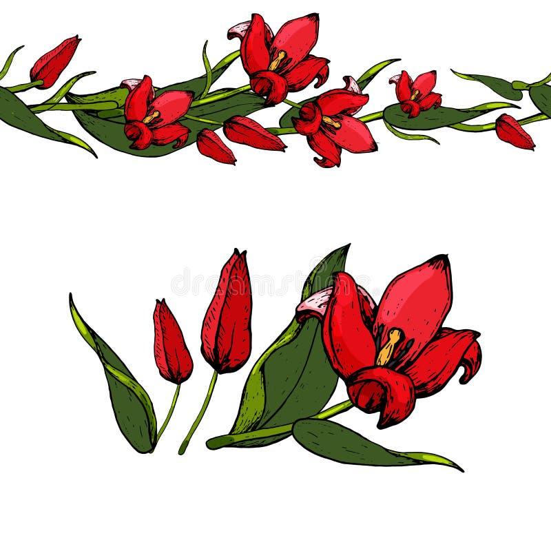 Nahtlose Bürste von Tulpen lizenzfreie stockbilder