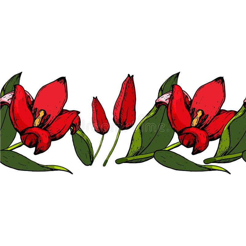 Nahtlose Bürste von Tulpen stockbild
