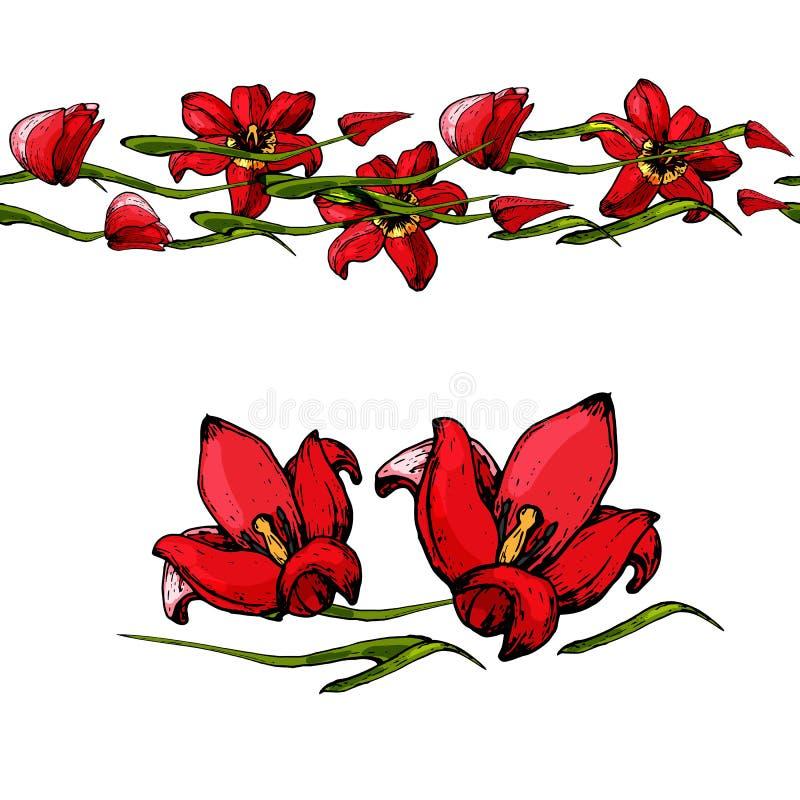 Nahtlose Bürste von Tulpen lizenzfreies stockbild