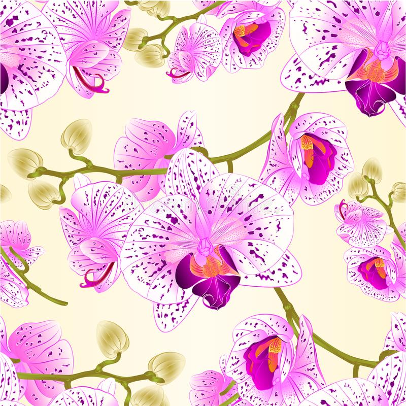 Nahtlose Beschaffenheitsorchideen blüht purpurroten und weißen Stamm des Phalaenopsis tropische Betriebsund knospt Weinlesevektor lizenzfreie abbildung