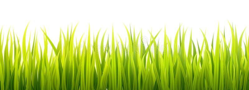 Nahtlose Frühlingsgraslinien für die Einfassung, Seitenende und Dekorationen Frühjahrsprösslinge wächst in einem Tageslicht stock abbildung