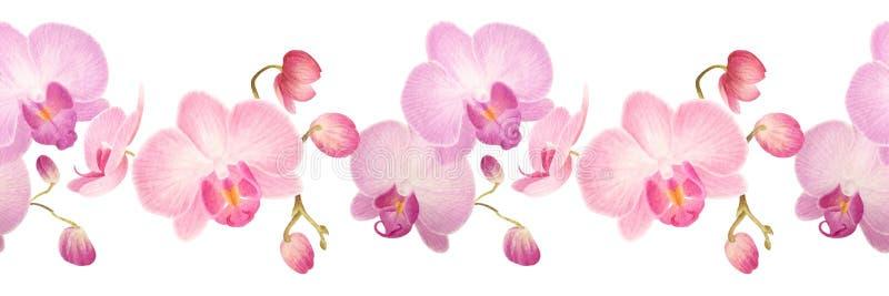 Nahtlose Grenze des Aquarells mit Orchideen vektor abbildung