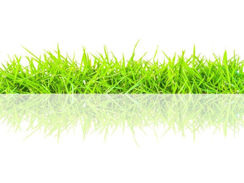 Nahtlose Grenze des grünen Grases des Frühlinges stockfotografie