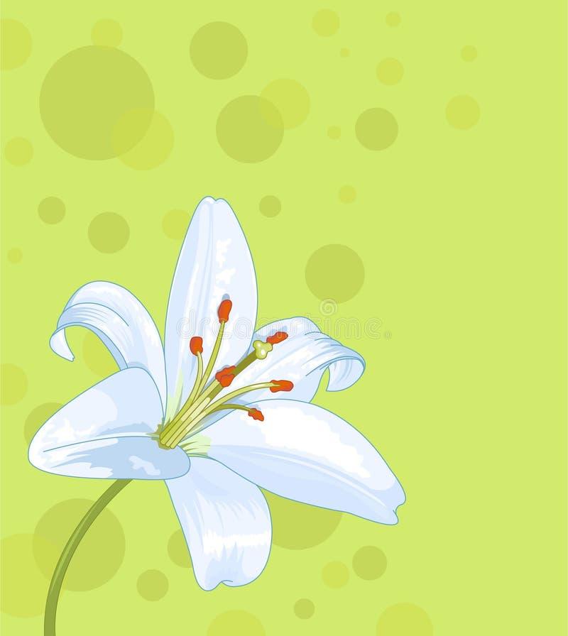 Nahtlose Karte der schönen Lilie vektor abbildung