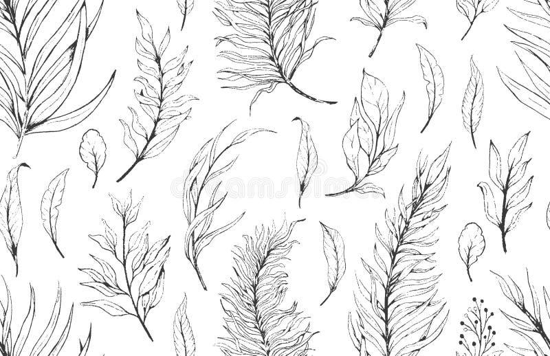 Nahtlose Musterpflanzenblätter der Skizze, zeichnender Natursatz Grafische botanische mit Blumenlinie gemaltes Kraut vektor abbildung
