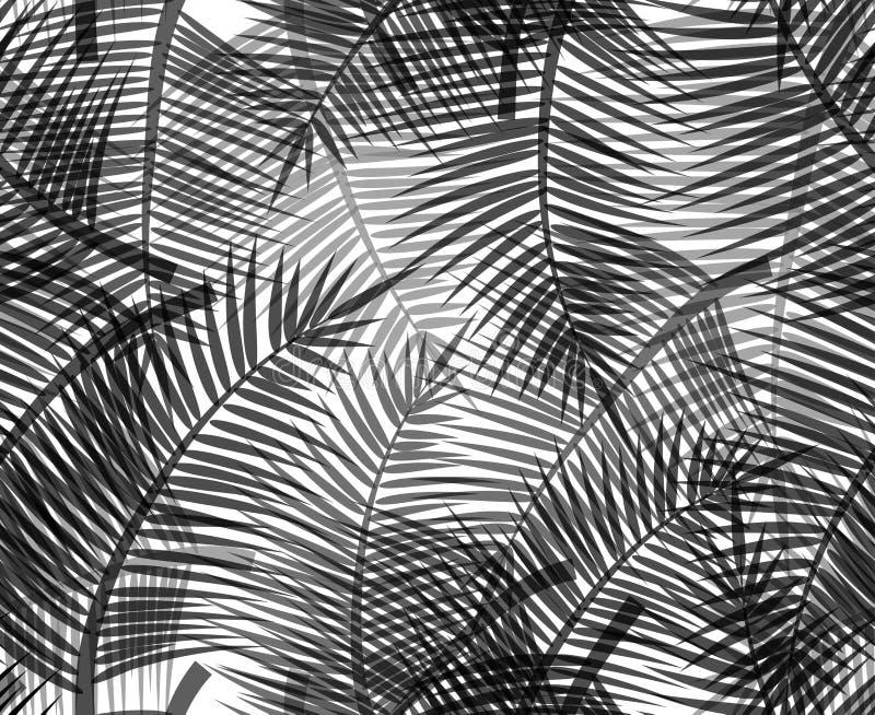 Nahtlose Schwarzweiss-Beschaffenheit mit Schattenbildern von Niederlassungen von Palmen auf weißem Hintergrund lizenzfreie abbildung
