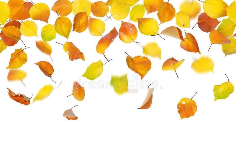 Nahtloser fallender Herbstlaub lizenzfreie stockfotografie
