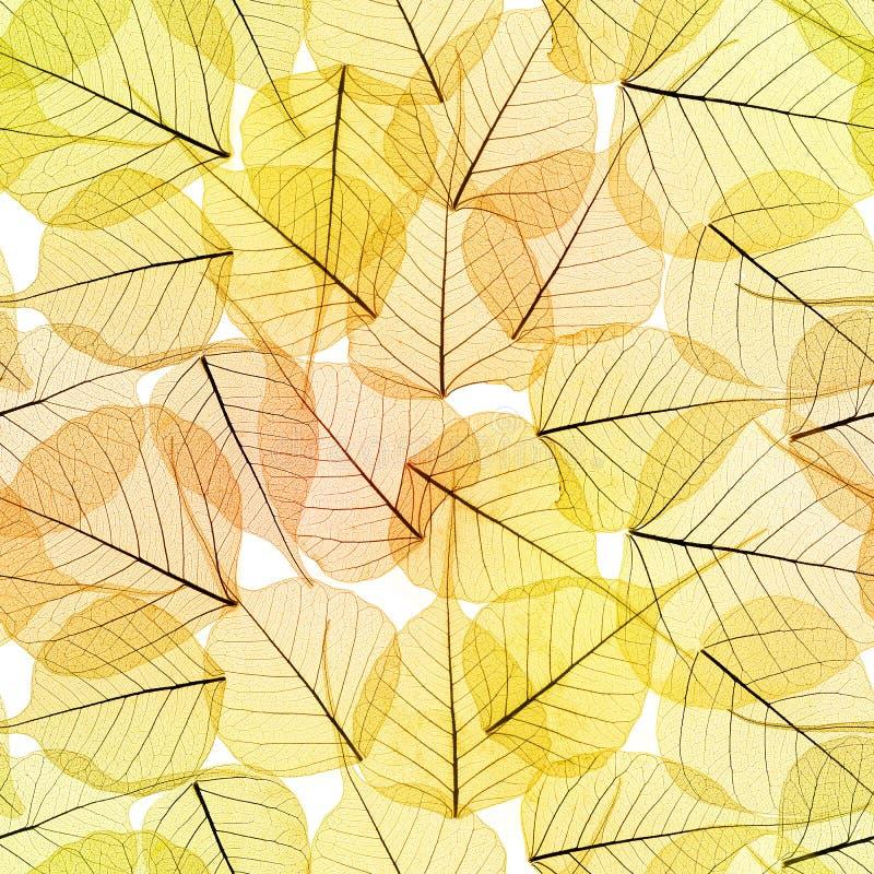 Nahtloser Hintergrund - Autumn Leaves Pattern stockfotografie