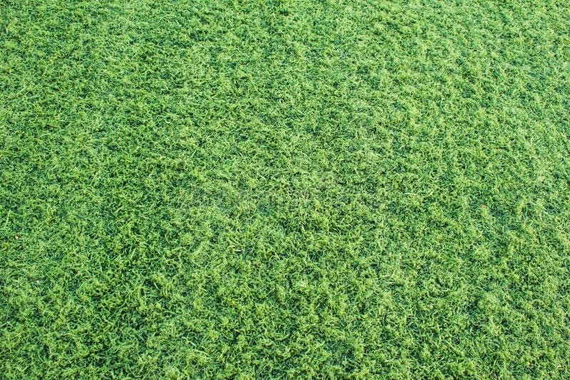 Nahtloser Hintergrund des grünen Grases stockfoto