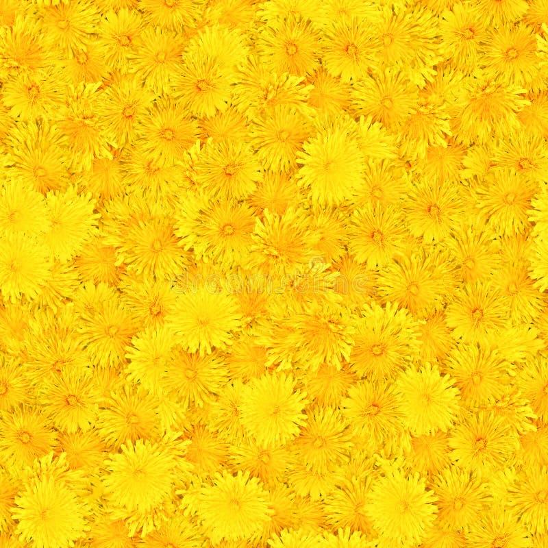 Nahtloser Hintergrund mit dem mehrfarbigen Blumenblumenblatt lizenzfreie stockbilder