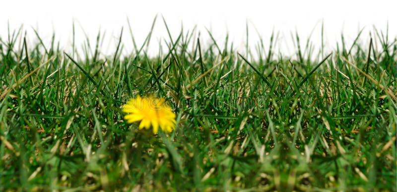 Nahtloses Bild mit Gras lizenzfreie stockfotografie