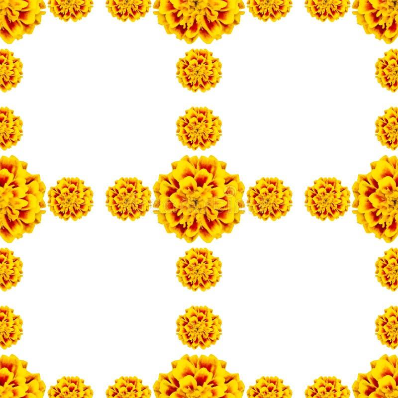 Nahtloses gelbes Muster von Blumen tagetes patula lizenzfreie abbildung
