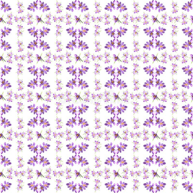 Nahtloses mit Blumenmuster des Fr?hlinges mit violetten gestreiften crokuses auf einem wei?en Hintergrund stockfoto