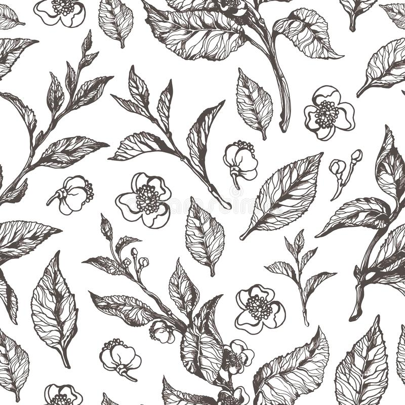 Nahtloses mit Blumenmuster des Vektors Teebusch lizenzfreie abbildung