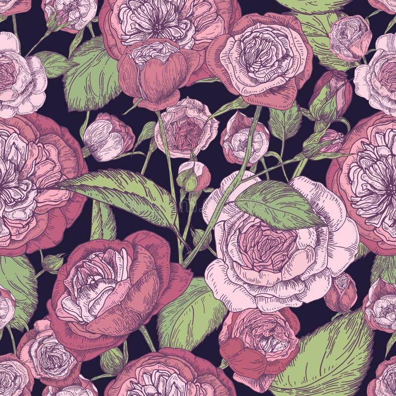 Nahtloses Muster der schönen ausführlichen pion-förmigen Rose Hand gezeichnete Blütenblumen und -blätter Bunter Weinlesevektor lizenzfreie abbildung