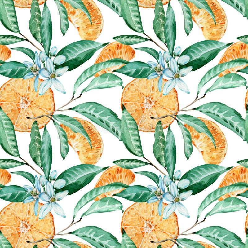 Nahtloses Muster der Tangerine Orange Schnitt, Blumen und Blätter Aquarellillustration lokalisiert auf weißem Hintergrund stock abbildung