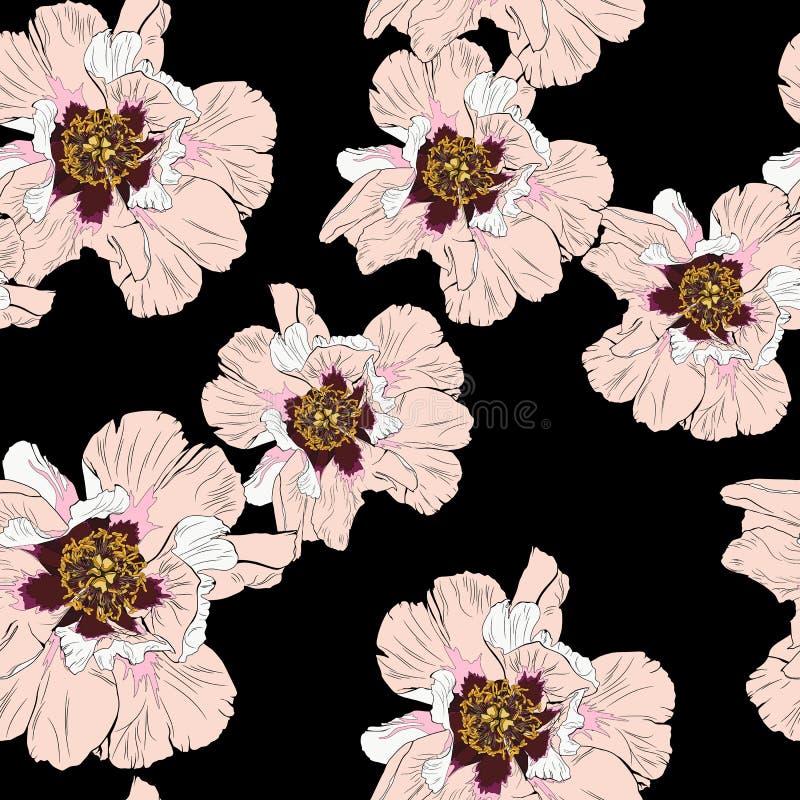 Nahtloses Muster der Wildflowerpfingstrosen-Blume lokalisiert auf schwarzem Hintergrund stock abbildung