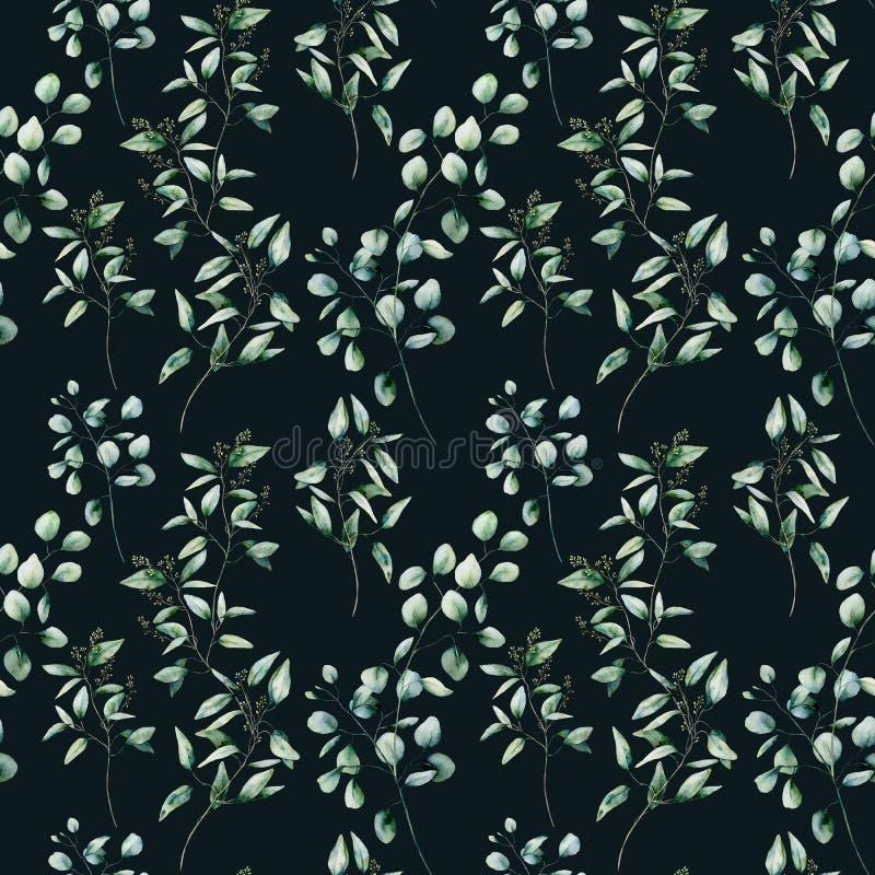 Nahtloses Muster des Aquarelleukalyptus auf schwarzem Hintergrund Handgemalter lokalisierter silberner Dollar und ges?ter Eukalyp stock abbildung