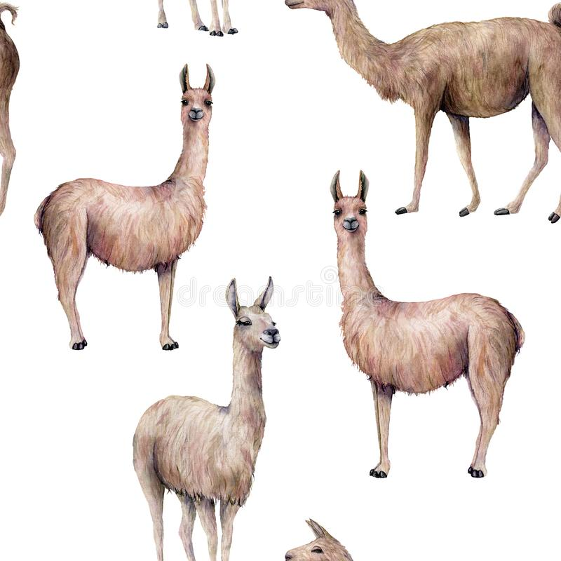 Nahtloses Muster des Aquarells mit Lama Handgemalte schöne Illustration mit dem Tier lokalisiert auf weißem Hintergrund vektor abbildung