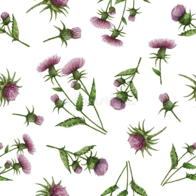 Nahtloses Muster des Aquarells mit Mariendistelblumen und -niederlassungen lizenzfreie abbildung