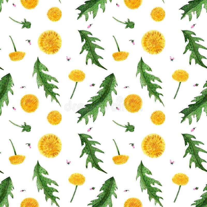Nahtloses Muster des Aquarells von Löwenzahnblumen und -blättern lizenzfreies stockfoto