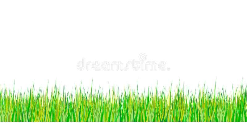 Nahtloses Muster des Frühlingsgrases Ostern-Dekoration mit Frühlingsgras und -wiese blüht Getrennt auf weißem Hintergrund Vektor stockfotos