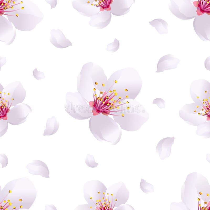 Nahtloses Muster des Frühlingshintergrundes mit Kirschblüte-Blüte vektor abbildung