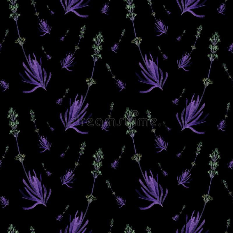Nahtloses Muster des Handgezogenen Aquarells des Frühlingslavendels auf einem schwarzen Hintergrund Dunkle Illustration des nette lizenzfreie abbildung