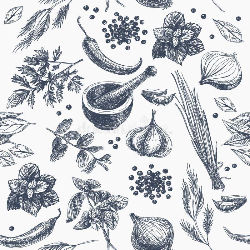 Nahtloses Muster des Vektors mit Kräutern und Gewürzen stock abbildung