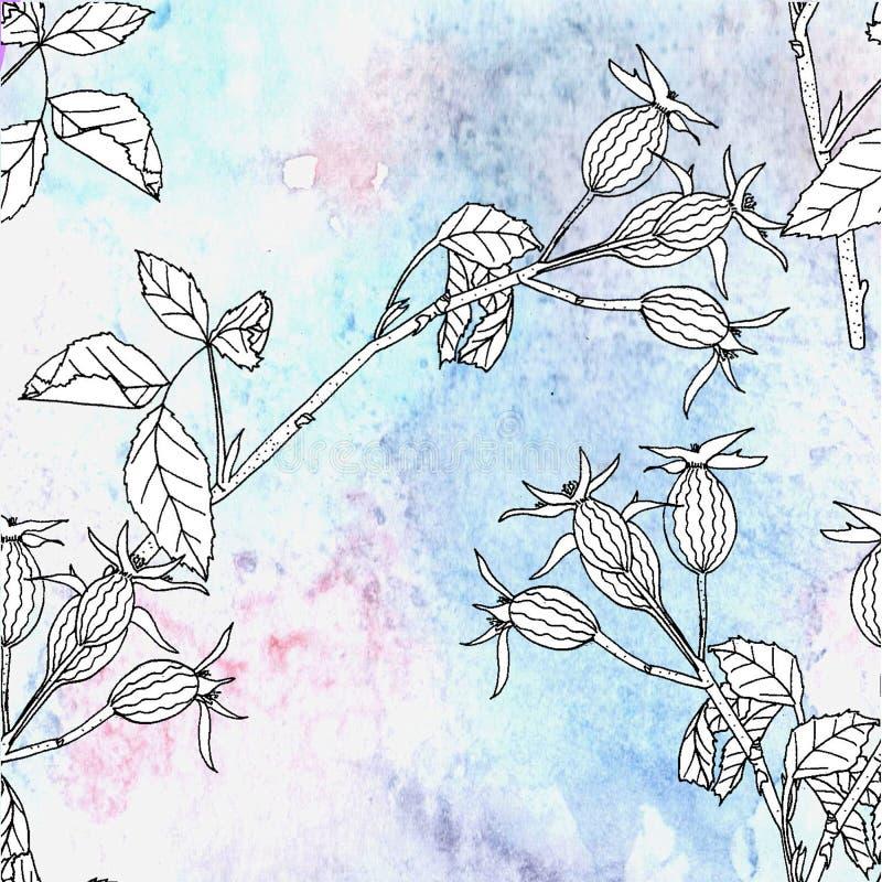 Nahtloses Muster mit Aquarellhintergrund und Hunderose Hand gezeichnet lizenzfreie abbildung