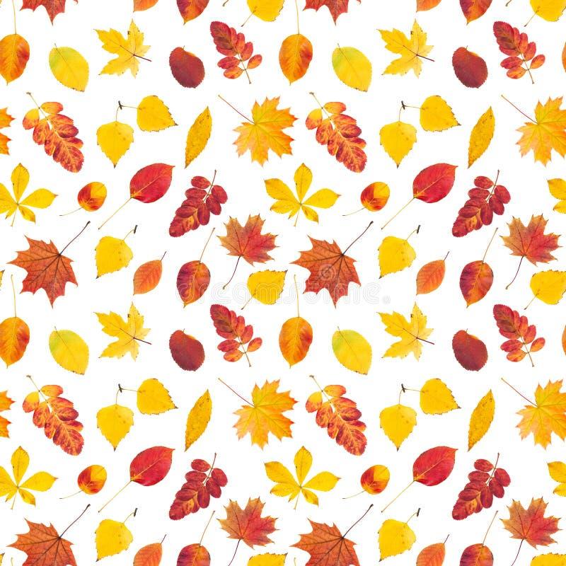 Nahtloses Muster mit bunten Herbstblättern lizenzfreie stockfotografie