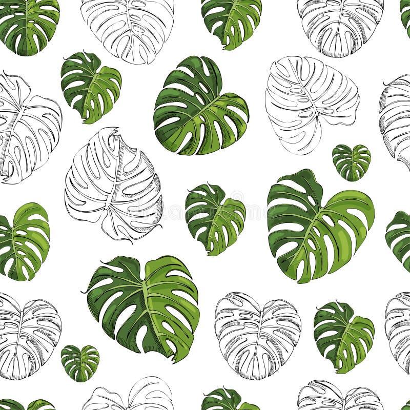 Nahtloses Muster mit einfarbigen und farbigen monstera Blättern lokalisiert auf weißem Hintergrund Hand gezeichnete Tintenskizze stock abbildung