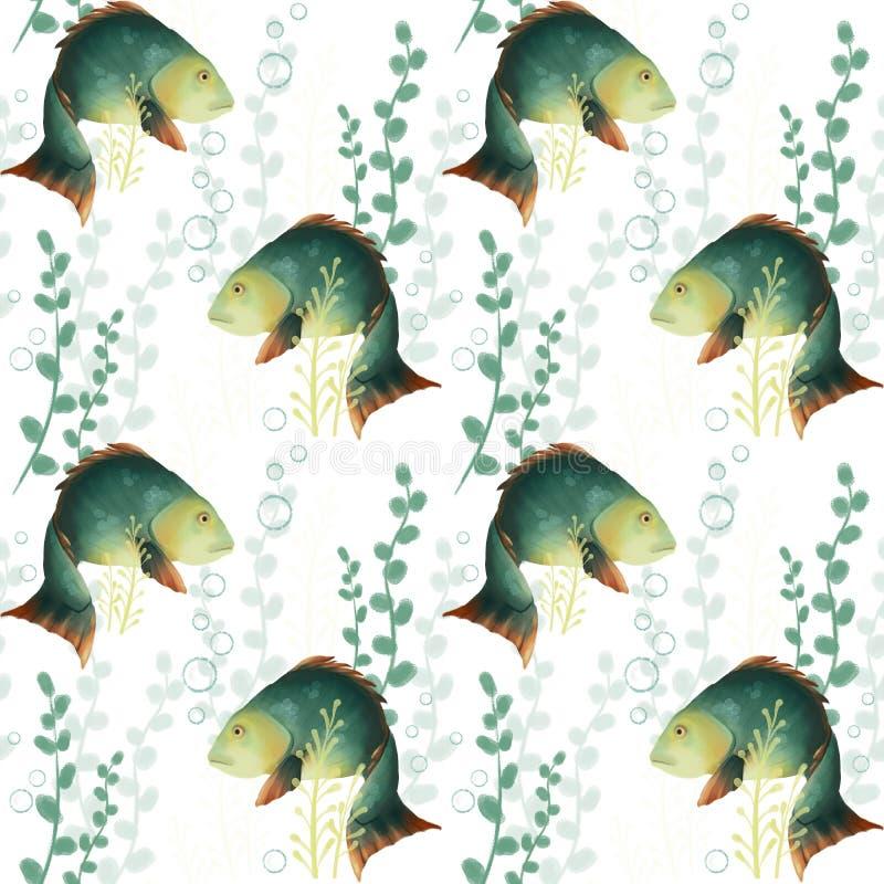 Nahtloses Muster mit Fischen Unterwasserwelt, Karausche und Algen auf einem weißen Hintergrund karpfen lizenzfreie abbildung