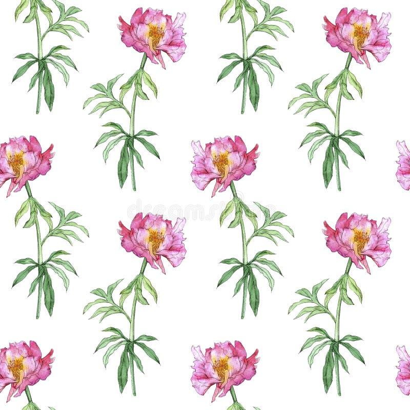 Nahtloses Muster mit rosa Pfingstrosenblume lizenzfreie stockbilder