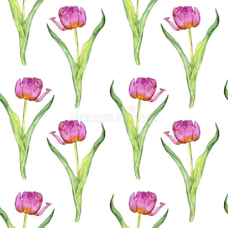 Nahtloses Muster mit rosa Tulpenblumen stockfotografie