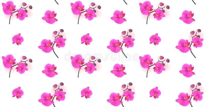 Nahtloses Muster-naturalistische schöne bunte rosa Orchidee Vec stock abbildung