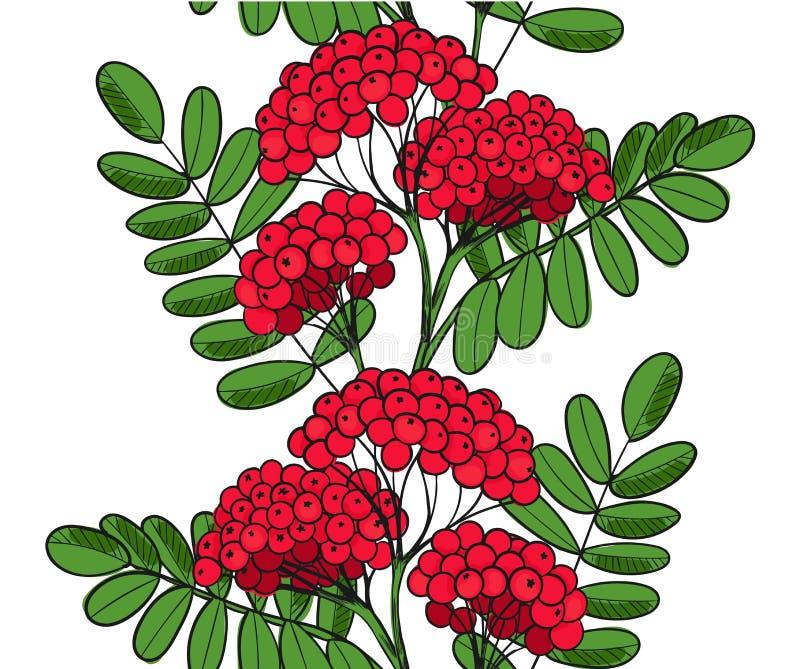 Nahtloses Muster Rot Rowan Tree Endloser Verzierungszweig der Vogelbeere oder ashberry Hintergrundblätter und Gruppe der Sorbusbe lizenzfreie abbildung