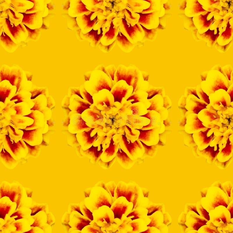 Nahtloses Muster von Blumen tagetes patula stockbild
