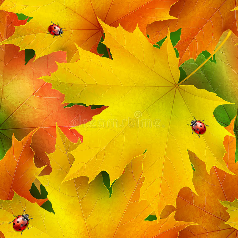 Nahtloses Muster von farbigen Herbstahornblättern und -marienkäfern stock abbildung